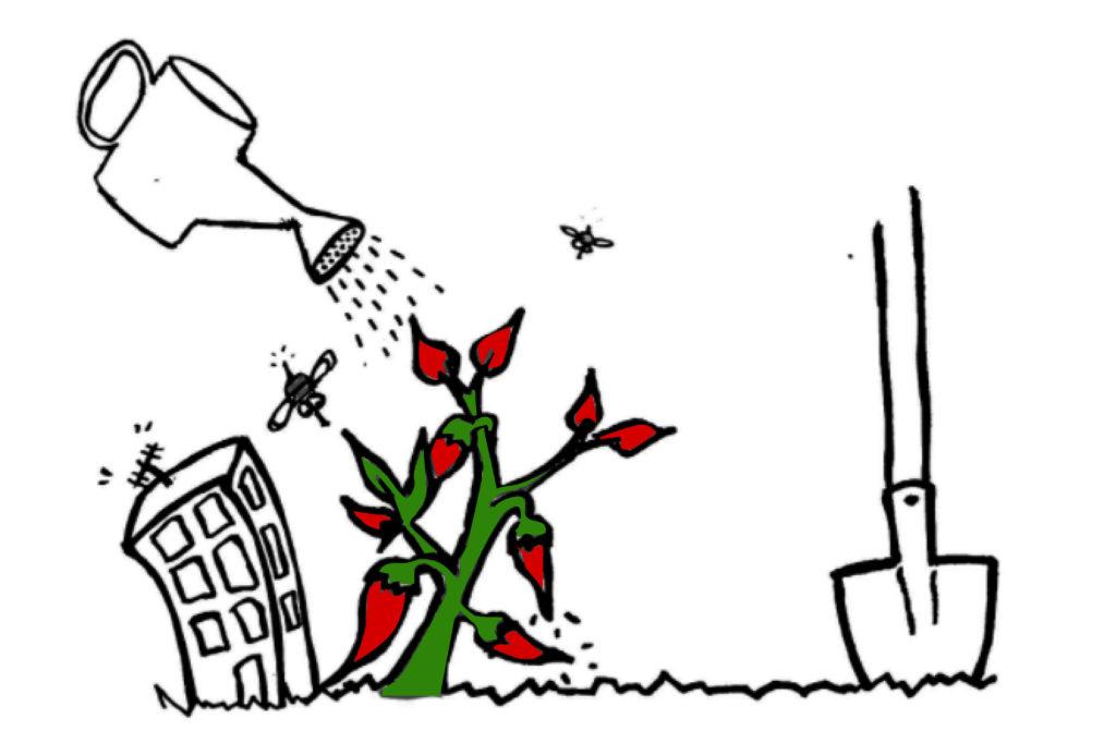 agricuture urbaine